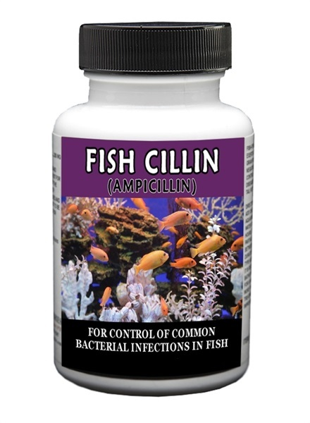 fish-cillin-250-mg-30-count-by-thomas-labs