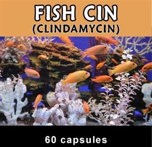 fish-cin-150-mg-60-count-by-thomas-labs