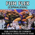 Thomas Labs Fish Health & Wellness – Fish-Flex 250 mg – 30 Capsules