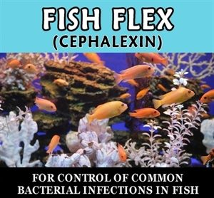 fish-flex-250-mg-30-count-by-thomas-labs